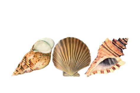 sand pattern png seashell patterns documents and designs