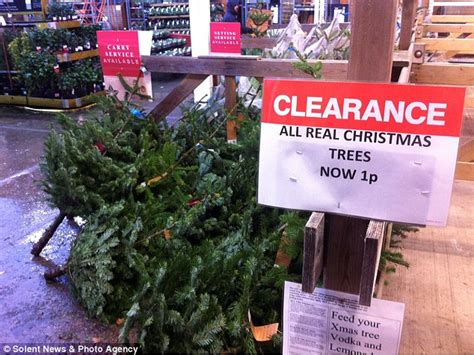 christmas tree sale orchard hardware shoppers desert the high as launches its sale early daily mail