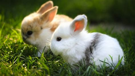 Rabbit Top Ml top ten rabbits toptenimals awesome animal pictures from across the interwebz