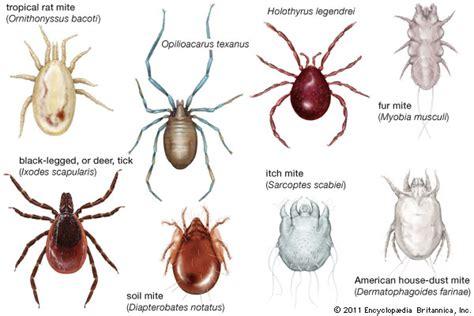 species of arachnida and myriopoda scorpions spiders mites ticks and centipedes injurious to classic reprint books arachnid arthropod britannica