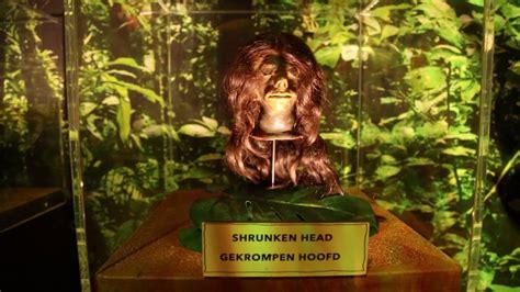 museum ripley amsterdam ripley s believe it or not amsterdam teaser youtube
