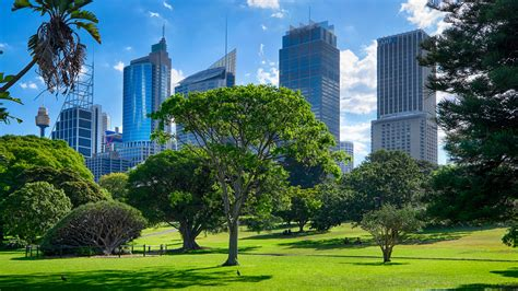 the botanical gardens sydney the top 10 amazing place to visit in sydney india tours