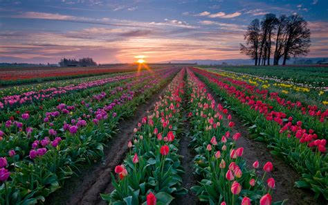 netherlands tulip fields netherlands gently beautiful country travel all together