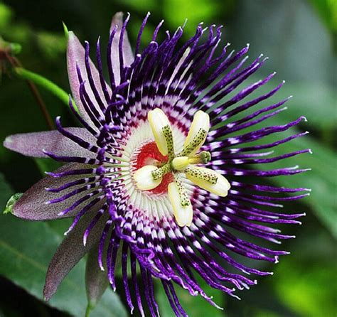 most beautiful flowers around the world the most beautiful flowers in the world thin blog