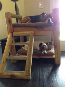 Woodworking Plans Loft Bed Desk by How To Build A Bunk Bed For Your Pets Diy Projects For Everyone