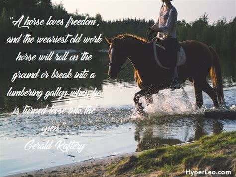 quotes about horses 40 positive and inspirational quotes for