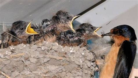 how to attract bug eating birds to your garden mnn