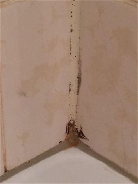schimmel in der dusche 4817 hotel restaurant weinlaube 코블렌츠 호텔 리뷰 가격 비교