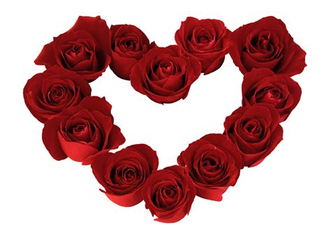 valentines day roses roses ground valentines day 820389 new heaven on