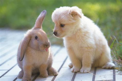 puppies and bunnies microchip cost everything you need to about microchipping your pet metro news