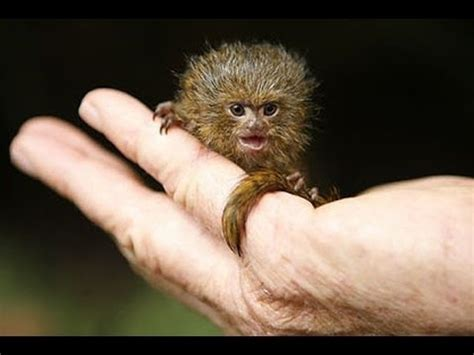 what is the smallest in the world 5 incredibly tiny animals world s smallest animals
