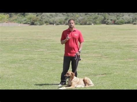 how to stop a dog from marking in the house how to stop a male dog from marking at a female dog s house dog behavior training