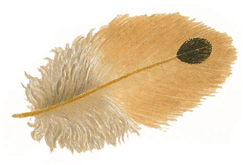 www feather free stock images vintage feathers the graphics fairy