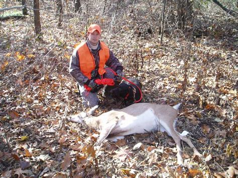 deer tracking dogs deer tracking dogs breeds breeds picture