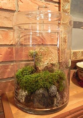 indoor moss garden kit 54 best images about growing moss indoors and out on