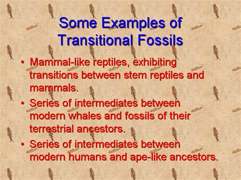 some exles of transitional fossils