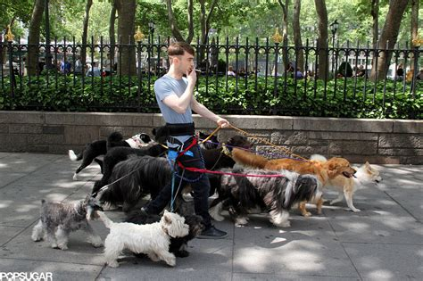 daniel radcliffe dogs daniel radcliffe archives tailster