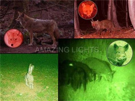Can Coyotes See Green Light by H25 250 Yards Green Hog Fox Varmint Coyote