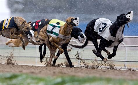 puppy racing iowa gov branstad signs bill to end greyhound racing in council bluffs at end of 2015