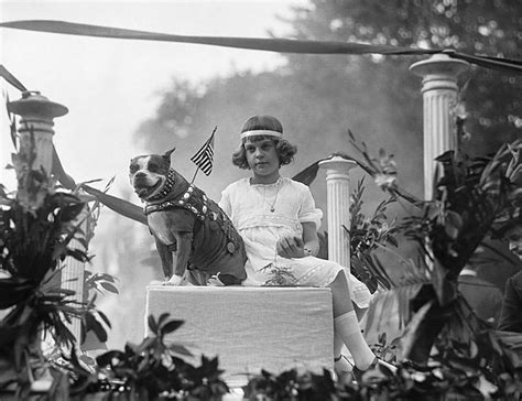 Sergeant Stubby Newspaper Sergeant Stubby The Brave Bull Terrier And The Animals Who Became Heroes Of The World War I
