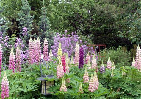 Perennial Wildflower Garden Design   Landscape Gallery