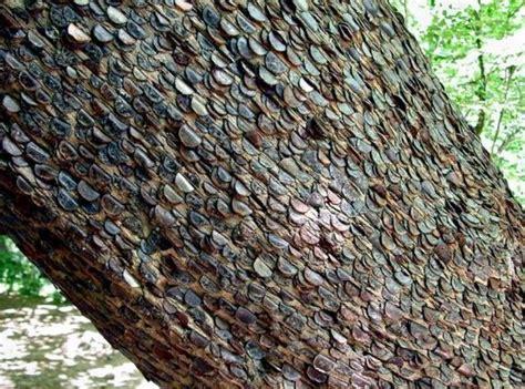 Komik Kolpri Our Field Of No32 real money trees barnorama