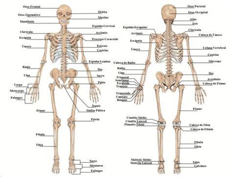 que es imagenes jpg y pdf cuadros sin 243 pticos del esqueleto humano y sus funciones