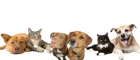 adopting a puppy adopt a pet