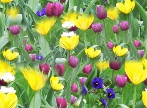 nomi di fiori primaverili fiori primaverili fiorista fiori di primavera