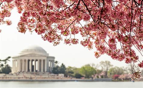 2 cherry tree groveland ma top 10 things to do while high in dc twotentwice