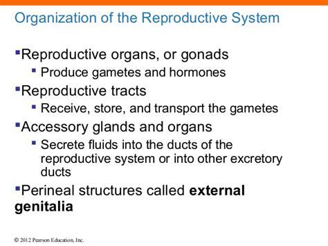 universitybeats compearsoneducation reproductive system ch 27 lecture presentation