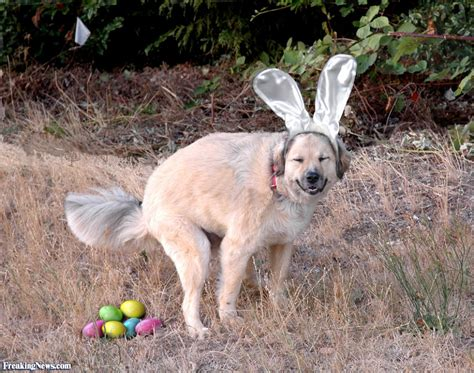 eggs for puppies if easter ruled pictures freaking news