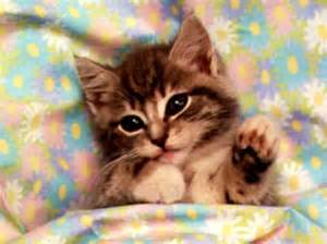 Baby kittens wallpaper and background images in the baby animals