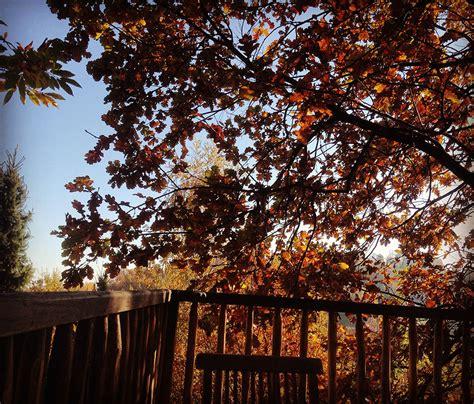 casa sull albero cuneo casa sull albero quercia il giardino dei semplici manta