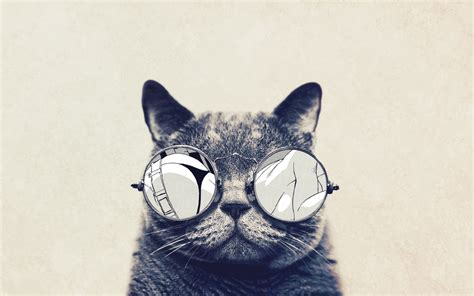 cat wallpaper macbook 1440x900 round glasses cute cat desktop pc and mac wallpaper
