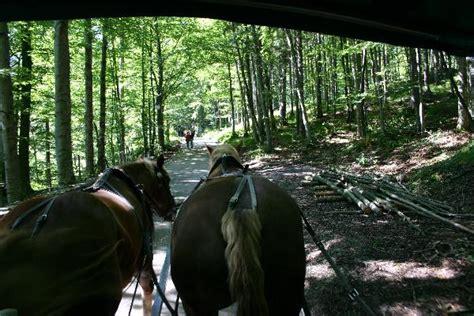 carrozze con cavalli il di neuschwanstein ciao donna il sito della donna