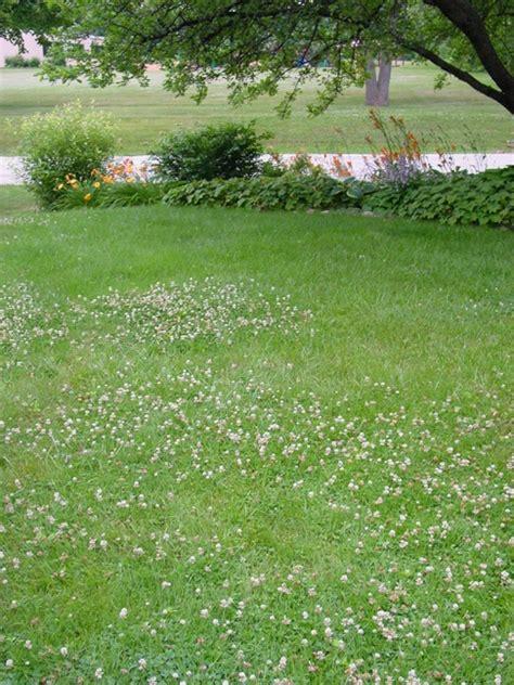 White Clover Landscaping Clover Lawn Landscape Clover Lawn And Landscape