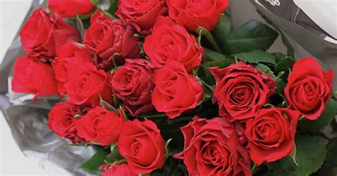 tesco valentines roses the best deals for s day roses from next