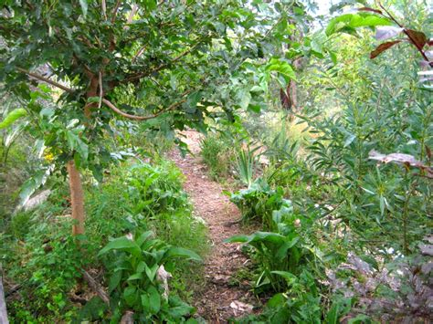 Edible Forest Gardens author Dave Jacke is coming to