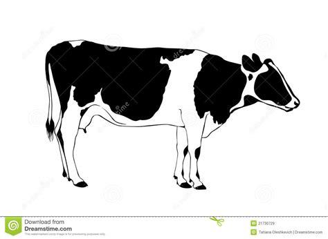 imagenes libres blanco y negro vaca blanco y negro im 225 genes de archivo libres de regal 237 as