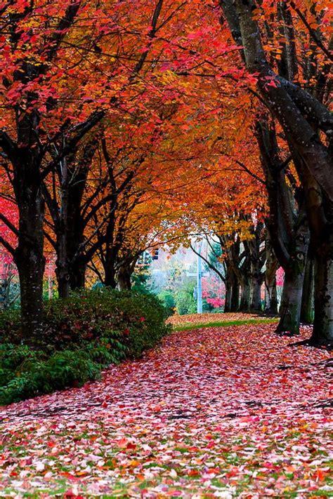 garten der tugendhaften die besten 17 bilder zu autumn auf san