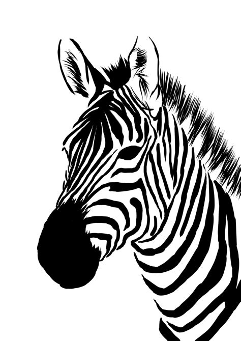 zebra pattern artwork zebra face pictures galleryhip com the hippest