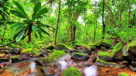 exotic tropical landscape jungle flow stones rocks