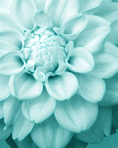 pretty blue colors the sweetest petunia color love aqua