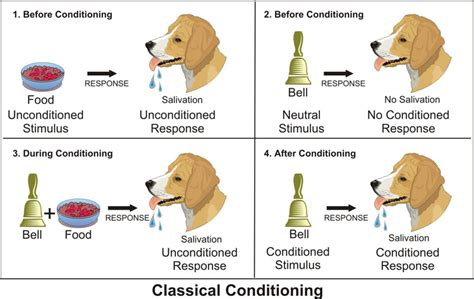 classical conditioning diagram animal learning theory nisi and lisi professional