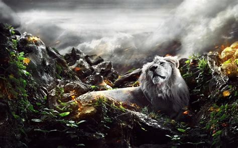jungle lion wallpapers hd wallpapers id
