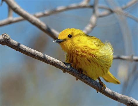 how to attract these stunning and rare birds to your yard