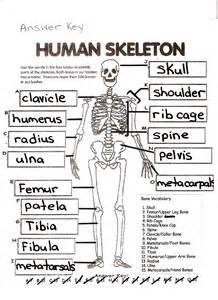 human skull labeling worksheet abitlikethis
