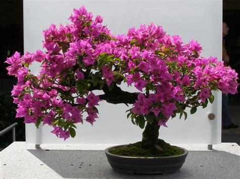 decorar interiores con flores plantas de interior con flor para decorar