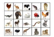 printable animal pictures for sorting animal classification sort pictures to pin on pinterest